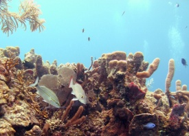 The_reef_Belize_R_Cosgrove